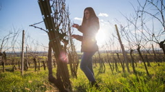 Person check vineyard branches Stock Footage