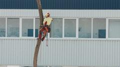 Lumberjack cutting tree urban city 2/4 Stock Footage