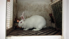 Big white rabbit frightened huddled in the corner of the cage Stock Footage