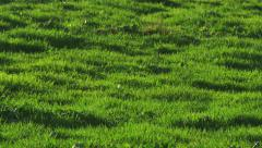 Grass Meadow Field With Windy Movement - stock footage