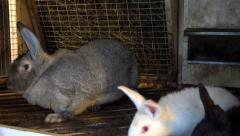 Small and large rabbits kept in an artificial environment on a farm Stock Footage