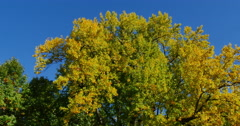 4K, Autumn colors in wild forest Stock Footage