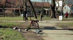 Pigeons pecking crumbs. Women and children walking through the park. Sunny day. Stock Footage