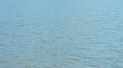 Waves of water in swamp or lake Stock Footage