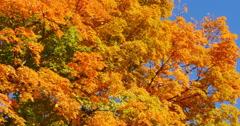 4K, Autumn in Upstate, NY, USA - stock footage