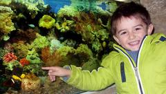 Little boy in the aquarium Stock Photos
