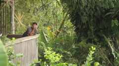 Local on a Porch in a Jungle Landscape on the Island of Pohnpei Stock Footage