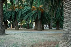 Palm trees in the park Stock Photos
