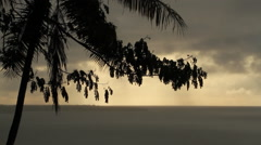 Coastal Landscape on the Island of Pohnpei Stock Footage