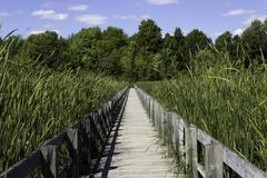 Boardwalk over the marsh Stock Photos