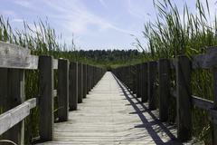 Boardwalk over the marsh - stock photo