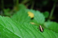 Small brown grasshopper on a green leaf in summer Stock Photos