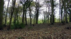 Woodland falling leaves autumn Stock Footage