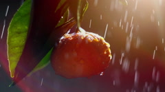 Mandarin fruit drop of water in the sun - Stock Video Stock Footage