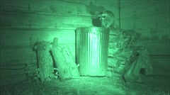 Raccoon at Night at Garbage Can in Infrared with Night Vision Stock Footage