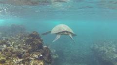 Green Sea Turtle in Hawaii in Coral Reef Area Stock Footage