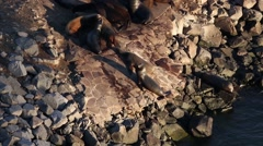 Sea Lion on the rocks in Mexico Port Stock Footage