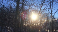 Sun Coming Through Bursh Appears As Crashing Meteorite - stock footage
