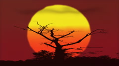 Hot Sunset African Tree Savanna Red Sky Awesome Stock Footage