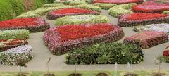 Ornamental flower garden Stock Photos