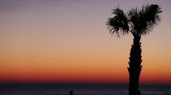 Sunrise Palm Tree Stock Footage