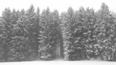 Snowfall in the winter forest Stock Footage