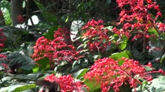 Red Helen Butterfly Stock Footage