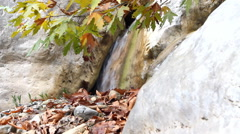 Autumn maple and waterfall Stock Footage