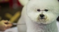 Dog portrait shot at hairdresser Stock Footage