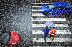 Pedestrian crossing in the heavy snowfall Stock Photos
