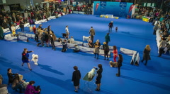 Wide shot of showroom at dog exhibition in Slovenia Stock Footage