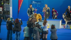 Dog winners on winning podium at exhibition Stock Footage