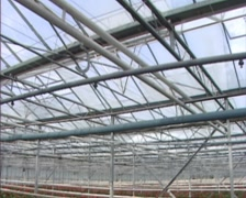 Greenhouse with pipe rail heating system in the 1980s - tilt down Stock Footage