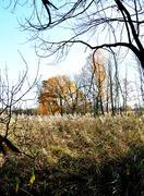 Late autumn - stock photo
