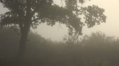 Morning Fog With Tree Trunks Stock Footage