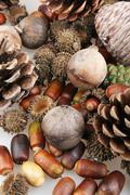 Set of autumn nature elements Stock Photos