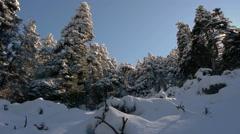 Abies pinsapo in the Sierra de las Nieves Stock Footage