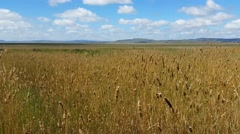 Flat Grass Field Summer Day - stock footage