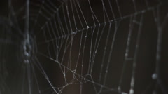 spider web - stock footage