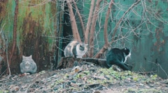 Three cat sitting on the street Stock Footage