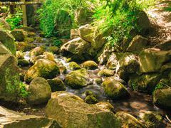 stones in woods forest. stream in gdansk oliva park. - stock photo
