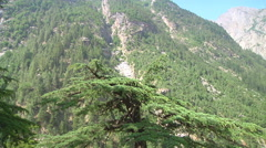 Mountains in the valley at Gangotri in Uttarakhand, India Stock Footage