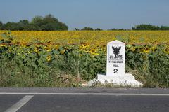 Sunflower field with a kilometer stone on the road Stock Photos