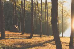 Camping at Pang Tong Under Royal Forest Park Stock Photos