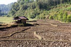 Paddy-field ridge,Traditional farming - stock photo