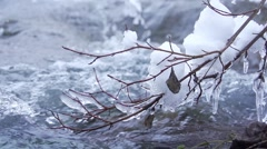 Icicles on a branch over the river in slow motion Stock Footage