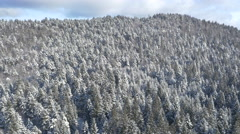 Aerial - Expansive forest of pine trees on a hill Stock Footage
