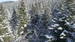 Aerial - Moving above the pine trees in winter season Stock Footage