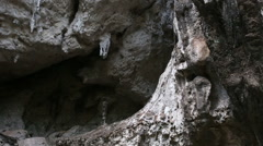 Cliff with growing trees and caves Stock Footage