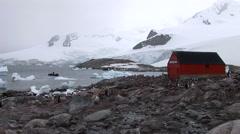 Gentoo Penguins at Chilean Base, Antarctica Stock Footage